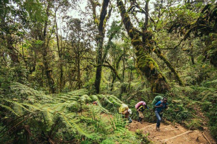 Marangu Route, Kilimanjaro