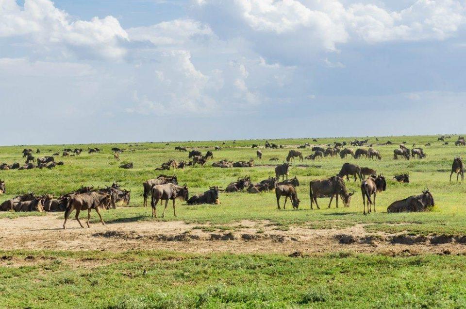 5 reasons to choose the wet season for your tanzanian safari