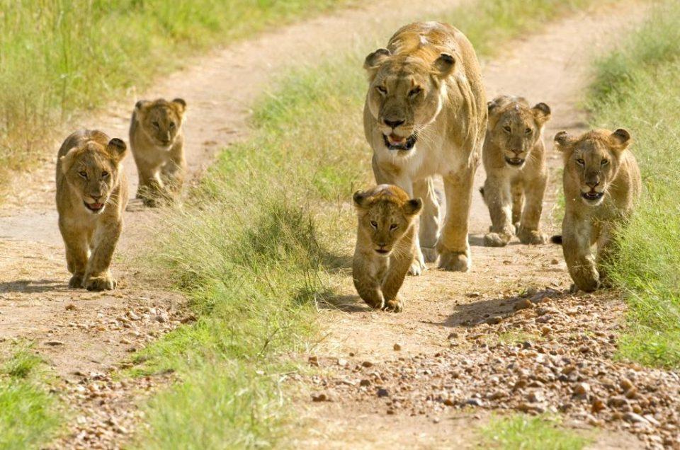 Why choose tanzania as your safari destination