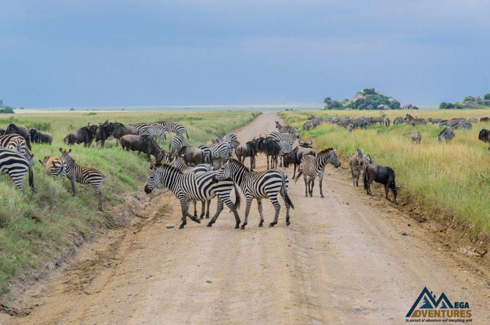 Tanzanias southern circuit umm yes