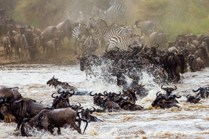 """4 Days – River Crossing Migration, Fly-In/Out<sup style=""""font-size: 12px; font-weight; margin-left: 5px; bottom: 5px;"""">Premium</sup>"""