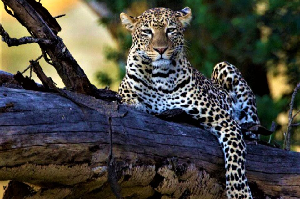 Why choose tanzania as your safari destination
